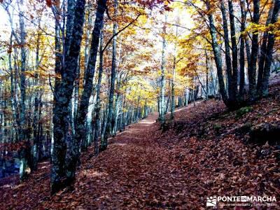 Castañar de El Tiemblo - Pozo de la Nieve- excursiones por la sierra - senderistas en otoño